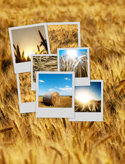 Pile of polaroids over a wheat background