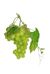 grapes and leaf