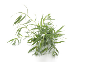 tarragon as spice to use in every kitchen