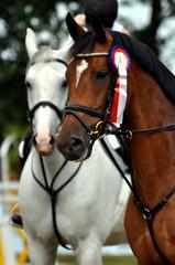 Pferd, Reitturnier, Reitsport, Sieger, Siegerehrung