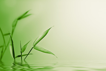 zen and young bamboo over green - nature background