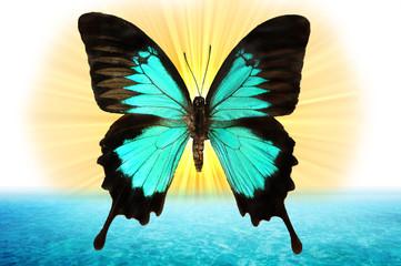 papillon de lumière dans l'océan
