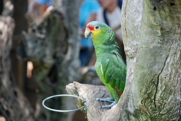 cute parrot on a tree branch
