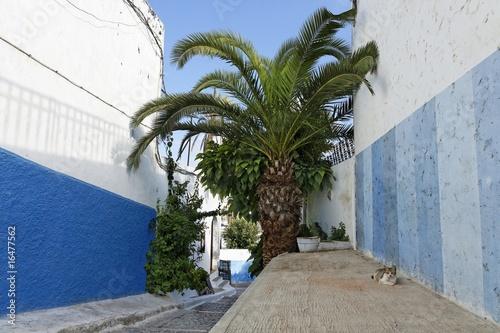chat dans les rues de la kasbah des oudayas rabat au maroc photo libre de droits sur la. Black Bedroom Furniture Sets. Home Design Ideas