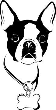Boston Love - Boston Terrier