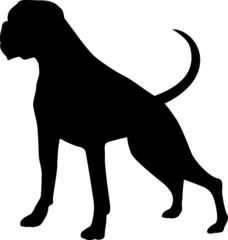 Boxer - Dog