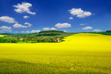 Canvas Prints Yellow Rural landscape