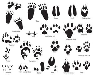 animal traces