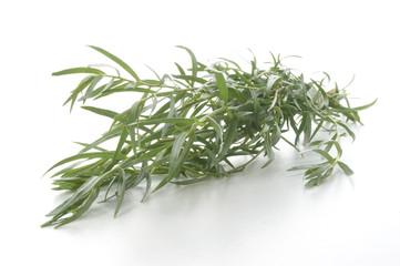 some organic tarragon and a white background