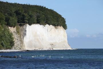 Kreidefelsen - Rügen - Chalk cliff