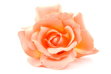 one silk orange rose over white background