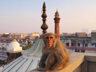 Autocollant pour porte Delhi New Delhi