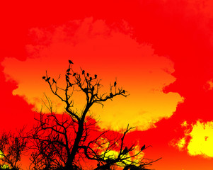 Orange Sky And Tree Foreground