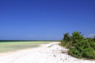 Palms in th Beach