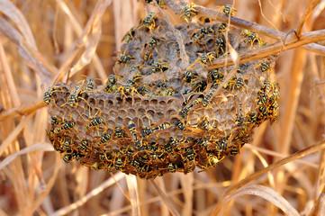 nido di vespe (also video)