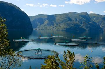 Lachszucht in Norwegens Fjorden