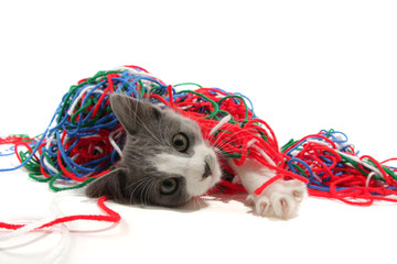 Poster Cat Kitten playing with yarn