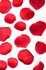 Red rose petals on white.