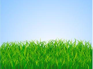 Gren grass