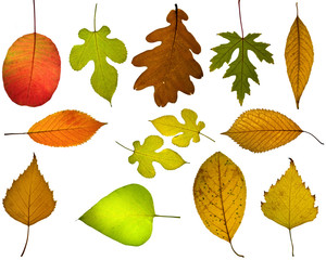 Set of different autumnal leaves