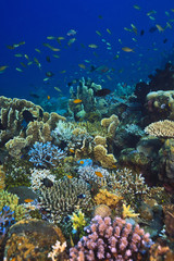 Deurstickers Onder water Coral reef