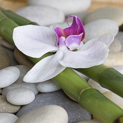 Orchidee auf Bambus