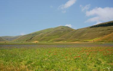 La fioritura di Castelluccio di Norcia.