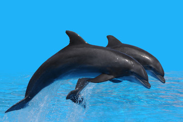 Photo sur Plexiglas Dauphins Delfin