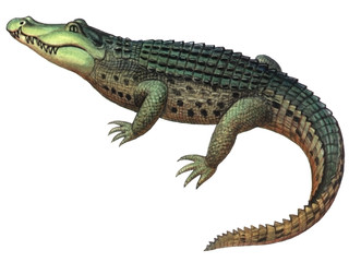 Reptile Crocodile