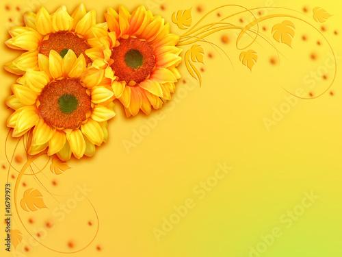 Girasole Coccinella Fleurs Coccinelle Sunflower Ladybird Immagini E