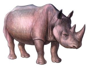 Animal Rhinoceros