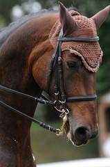 Pferdeschönheit
