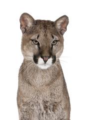 Printed kitchen splashbacks Puma Portrait of Puma cub, against white background, studio shot