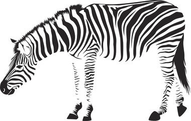zebra in vectors