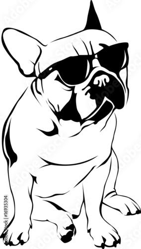Quot Cool Boy French Bulldog Quot Stockfotos Und Lizenzfreie