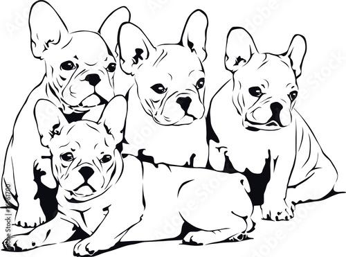 """french bulldog babies"" stockfotos und lizenzfreie"