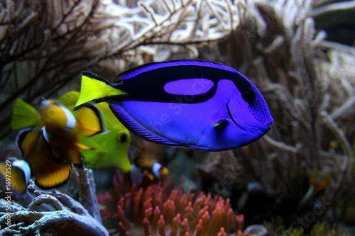 Salzwasser aquarium stockfotos und lizenzfreie bilder for Salzwasser aquarium fische