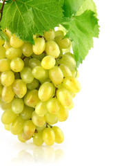 fresh grape cluster isolated fruit
