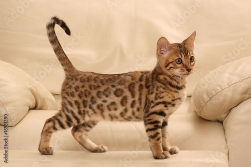 will kittens scratch furniture