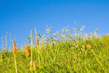 Fototapete - Eine Idyllische Wiese im Sommer