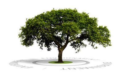 image concept d'environnement, un arbre isolé sur blanc