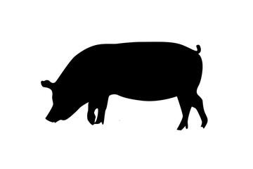 picto de cochon