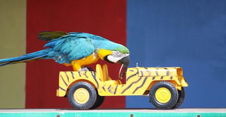 parrot driving a car