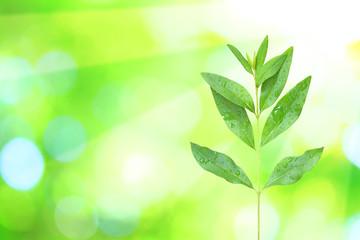 Sonnenstrahlen lechten im Frühling durch Blätter