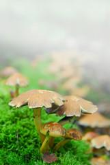 magic mushrooms fog