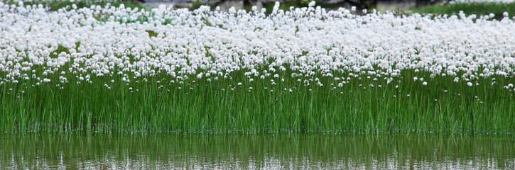 Fotorollo Reflexion fiori