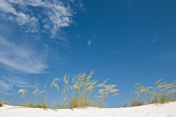 Sand dune and grasses
