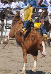 Bronco Bucking Cowboy