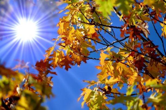 Herbstlaub im Sonnenschein