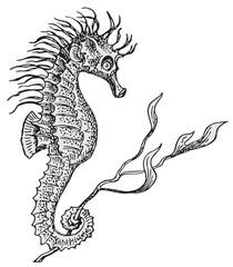 Hippocampus vector